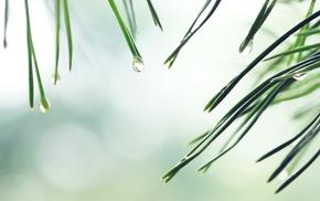 photography, plants, macro, nature