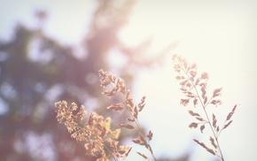 photography, macro, nature, plants