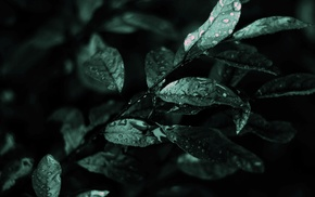 water drops, photography, leaves, macro, plants