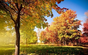 trees, landscape, fall, photography, park, grass