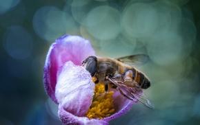 macro, flowers, bees