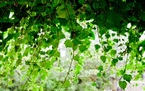 depth of field, nature, vines, plants, leaves, photography