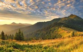 mountains, trees, plants, landscape, nature, photography