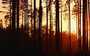 nature, trees, forest, plants, sunset, landscape