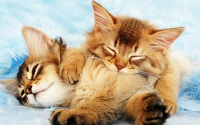 sleeping, kittens, cat, animals