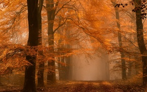 fall, path, trees, leaves, mist, daylight