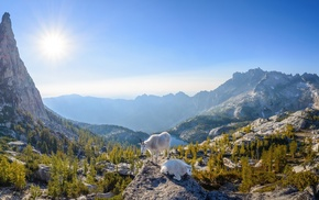 nature, Sun, goats, mountains, panoramas, trees