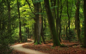 forest, trees, leaves, path, landscape, sunlight