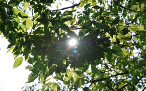 plants, nature, leaves, sunlight, branch, photography