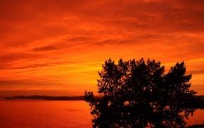 sunset, trees, nature, landscape, orange, photography
