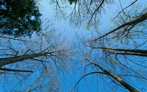 sky, trees, nature, branch, photography