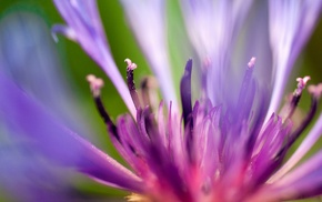 flowers, purple, macro, plants