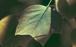 plants, photography, leaves, nature, macro