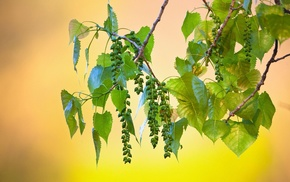 plants, nature, fruit, leaves, photography