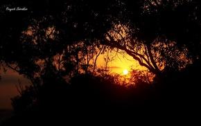 nature, photography, sunset, trees, plants, India