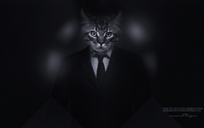 photo manipulation, Kitty, majestic casual channel, men, big cats, cat