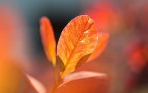 macro, leaves, nature, fall