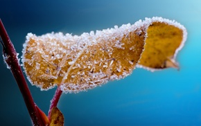 frost, macro, ice, leaves