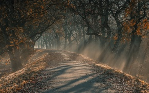 sun rays, mist, trees, leaves, dirt road, morning