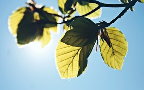 photography, leaves, sunlight, plants, nature, branch