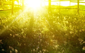 nature, summer, field, sunlight, plants, photography