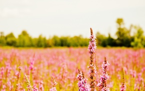 plants, nature, landscape, photography, field, depth of field