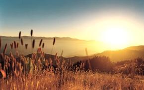 nature, summer, field, plants, photography, landscape