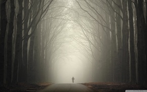 forest, bicycle, mist, trees