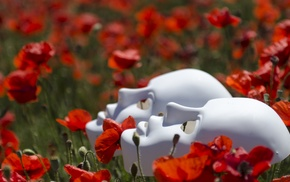 field, flowers, poppies, mask, depth of field, nature