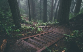 forest, foliage, green, steps, trees, pine trees