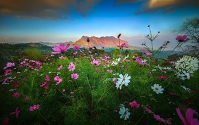 Cosmos flower, mountains, landscape, spring, nature, flowers