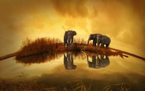 elephant, Thailand, animals