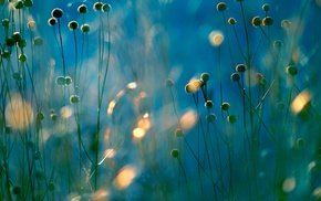 macro, nature, plants
