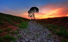 sunlight, nature, landscape, trees