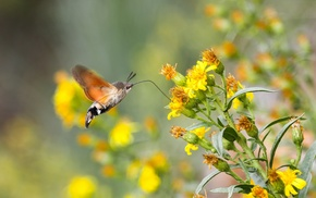 landscape, lepidoptera, nature