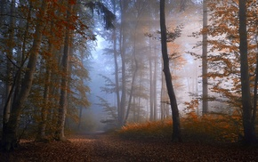 atmosphere, nature, path, fall, forest, trees