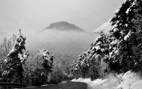 road, winter, trees, photography, nature, snow