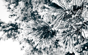 nature, frost, plants, winter, photography, macro