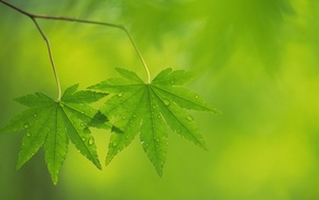 leaves, nature, macro, plants, photography, green