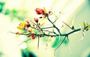 leaves, photography, nature, macro, branch, plants