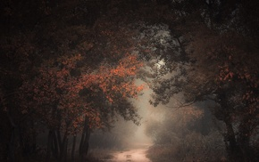 forest, mist, dark, landscape, trees, path