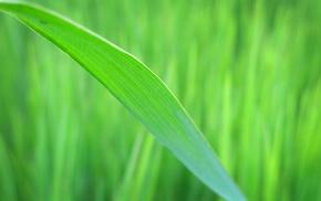 nature, plants, macro, photography, leaves