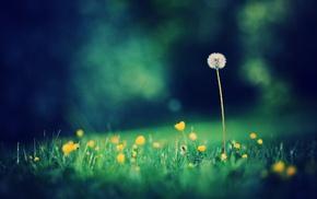 trees, grass, depth of field, dandelion