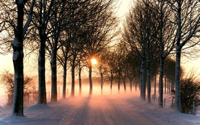 road, snow, winter, mist, plants, nature