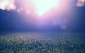 shadow, grass