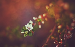 flowers, nature, bokeh