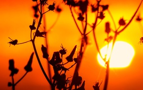 photography, sunset, nature, plants, macro, silhouette