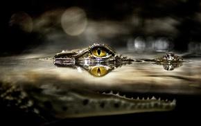 split view, National Geographic, alligators, eyes, water, yellow eyes