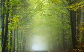 sunlight, leaves, morning, landscape, road, forest