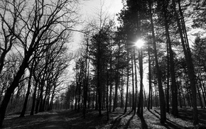 wood, park, monochrome, Serbia, forest